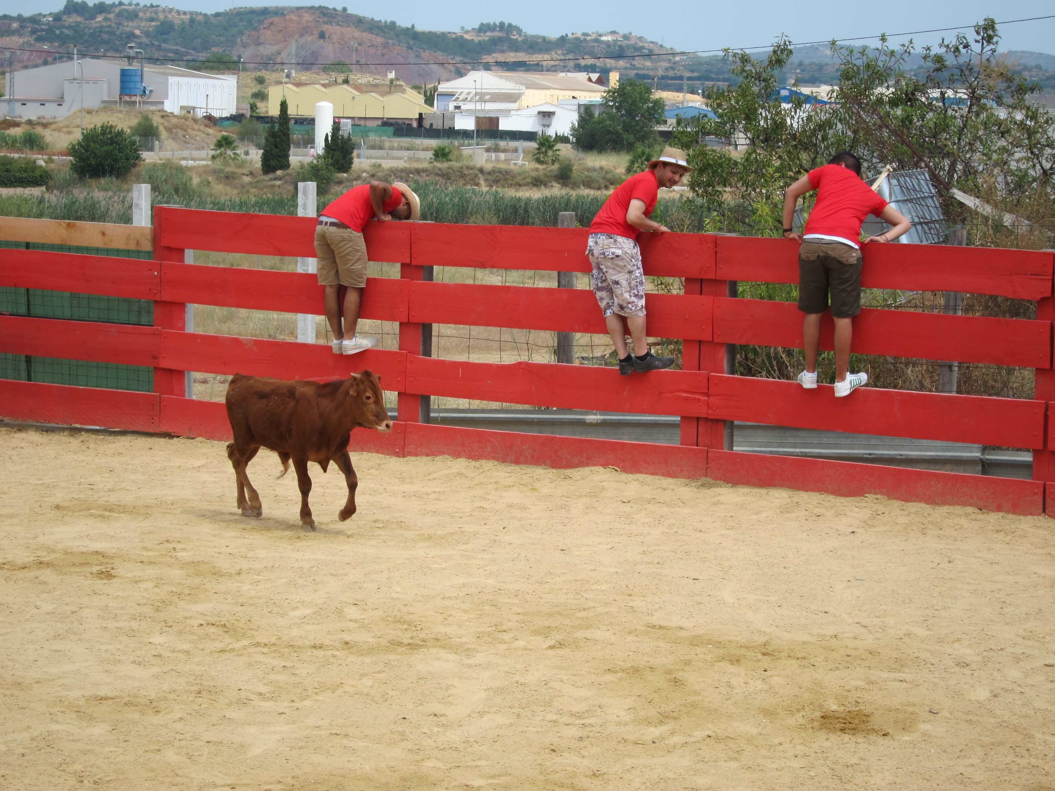 Marbella Baby Bull Running