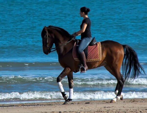 Valencia Horse Riding
